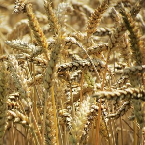 The Law of Seedtime and Harvest